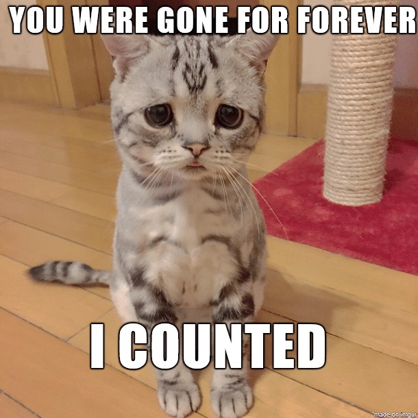 you-were-gone-for-forever-funny-cat-meme