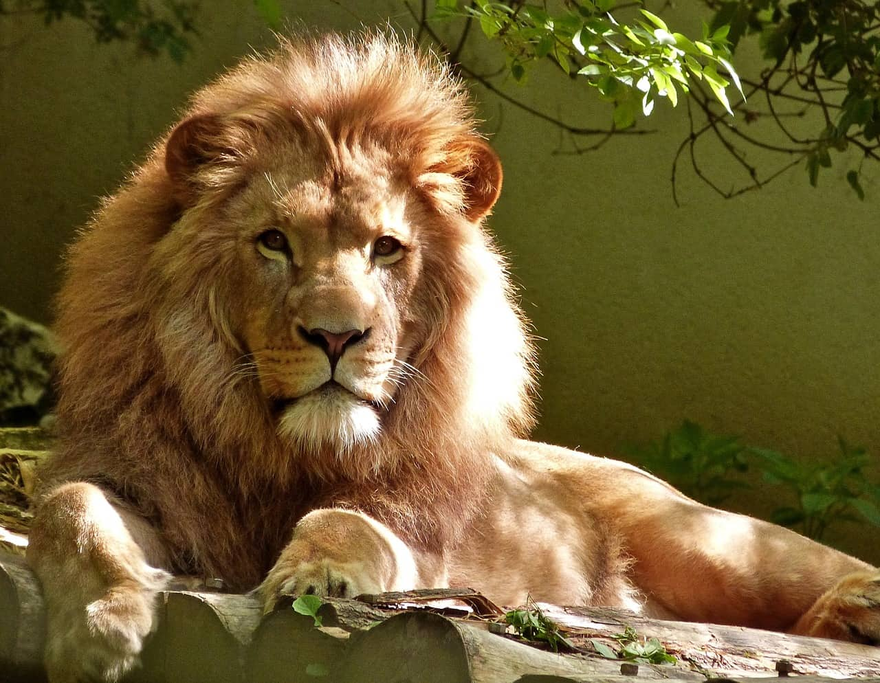 How to Make a Leo Man Fall In Love (5 Simple Steps)